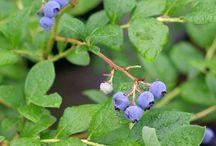 Frukt- og bærtips