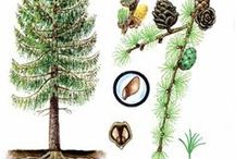 stromy byliny