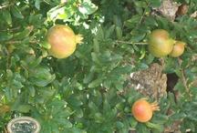 Frutti e colori dell'autunno al Podere