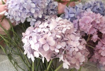 Esther & Adrian / May 2014 soft powdery blues, pale creams, lilacs and lavenders.