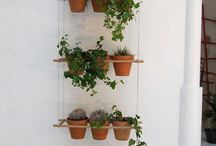 Indoor herbs plants