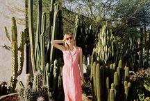 Cactus desert shoot