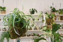 RETAIL STORES   The Planthunter Directory / Retail Stores we love!