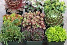 plantes suspension