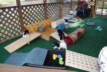 Puppy playroom ideas