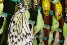 Eclosoire & Chrysalides / Eclosoire & Chrysalides, Jardin aux Papillons de Vannes