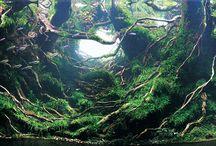 akvarium aquascaping