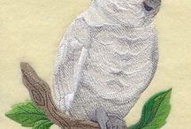 Goffin Cockatoo, Daniel <3