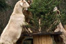 goats / by Susan Pitlik