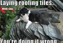 Roofing Jokes or Meme's