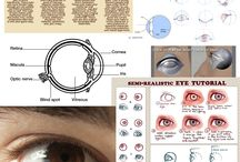 Anatomy_Eyeball