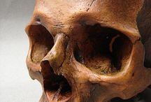 Art Ref - Skulls/Skeletons