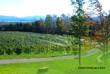 Wineries/Vignobles / Wineries/Vignobles