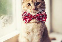 Cat Clothes Etc