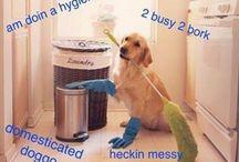 Doggggo memes