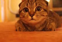 *かわいい猫の動画・画像 / cute cat video&image* / かわいい・笑える・癒しの猫画像