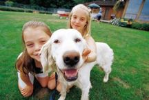 Family Pet / Information about caring for, training, playing with and adjusting to family pets