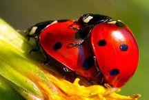 biedronki - ladybugs / śliczne biedronki  :)