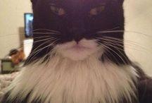 fuuny cat