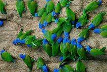 Maşil(blue&green)