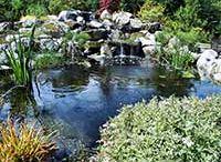 Luke's garden