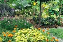 A ~ New Potager Garden 2014 / by Renee Schmidt