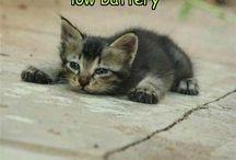 Cute, Cute, Cute / by Kathy Warner