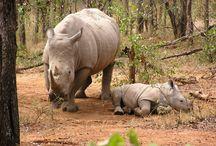 Rhino news