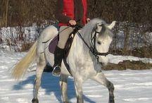 cavallomonAmour / Cavalli