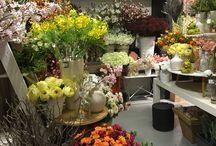 Dutch Dreams flowers