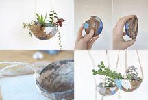 DIY pot of coconut