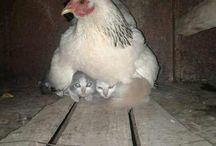 l'instinct maternel
