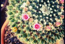 cactus / by elizabeth moran