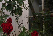 roses and death