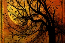 Halloween / by Rose Beckwith