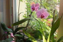 zahrada / venkovní a pokojové rostliny