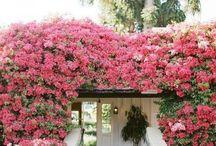 Virágba borult házak