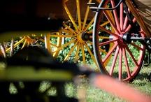 """Abrivado à l'Ancienne Beaucaire / Abrivado traditionnel pendant lequel les """"locaux"""" participent à un défilé à l'ancienne avec charrettes, vieux vélos, taureaux, chevaux, gardians et participants en costume 1900"""
