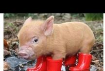 Piggies <3 / by April Miller