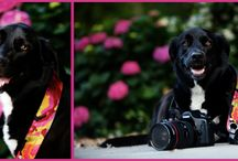 Shadow, the Abie Straps Model / Shadow is the official model dog for Abie Straps.  She is an avid photographer and love to take pictures of birds and squirrels.  She always wears the latest styles for the season and uses her fashion camera straps to make a statement about who she is and how she feels.