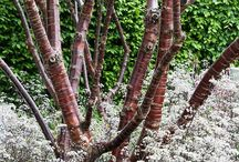 Lanscape Plants