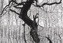 """Brett Weston / (1911–1993) American photographer. Van Deren Coke described Brett Weston as the """"child genius of American photography."""" He was the second of the four sons of photographer Edward Weston and Flora Chandler. Weston's earliest images from the 1920s reflect his intuitive sophisticated sense of abstraction. He often flattened the plane, engaging in layered space, an artistic style more commonly seen among the Abstract Expressionists and more modern painters like David Hockney than photographers."""