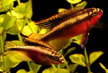 Featured Items / Our daily Featured Items posted here for all of our followers to see our most showcased arrivals! / by AquariumFish.net