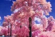 Wunderschöne Bäume aus aller Welt