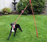 Outdoor dog fun