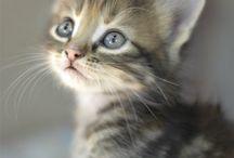 Gatos e outros bichos! / by Tonbo Nuske