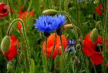 земля улыбается цветами.