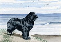 Newfoundlands dogs