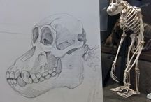 Zeichnungen / Eigene Zeichnungen und Skitzen