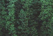 VICOMTE A. AW 2015 FORET VERDURE / VICOMTE A. AW15 mood Forêt